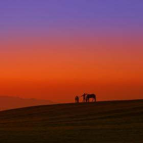 dívka a koně