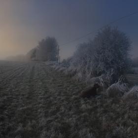 Zimní panorama se psem