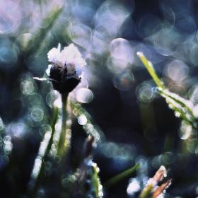 V zimní trávě