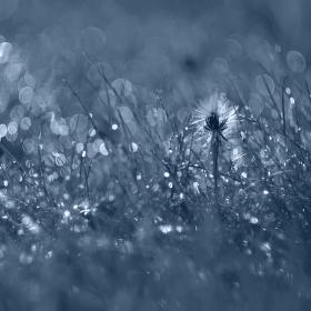 Snění v trávě