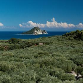 Olivovníky a moře