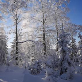 Padající sníh