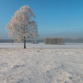 Zimní bříza