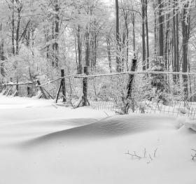 Les pod peřinou