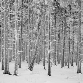 Omrzlý les