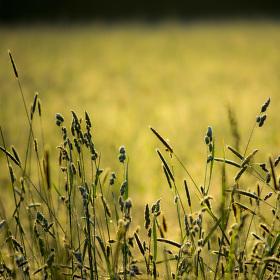 Procházka ranní trávou