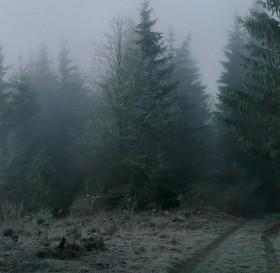 Z mraku do mlhy