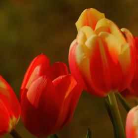 Už potřebuju jaro!