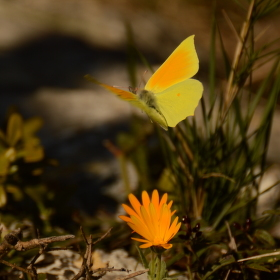 motýlí třepetání