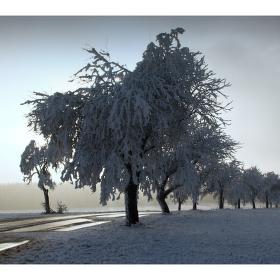 Zimní cestou....