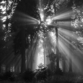 Osvícený les