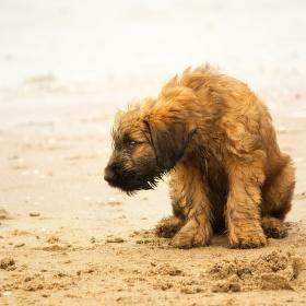 Puppy on the beach..