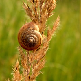 Dekorace suchej trávy