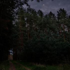Měsíc nad lesní cestou