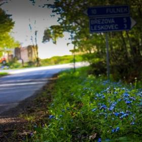 Květiny na konci cesty.