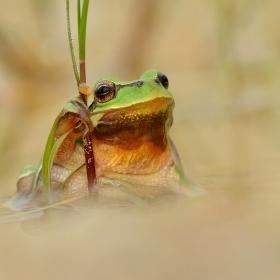 ...Zelený princ...