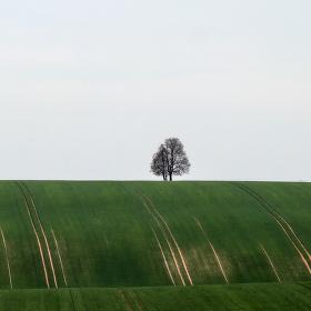 Trocha minimalismu