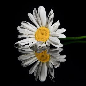 Broken Flowers V.