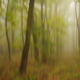 V podzimním lese