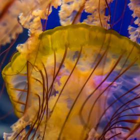 Medůzy v barvě
