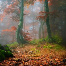 v hlubokém Krušnohorském lese