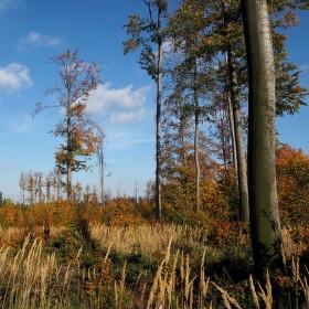 Podzimní příroda...