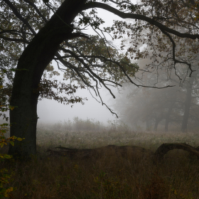 Magický les II.