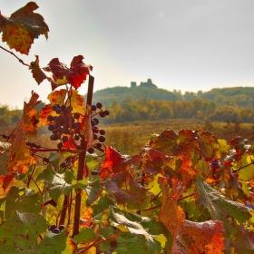 Podzim pod Pálavou