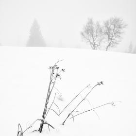 Zima na Rýchorách