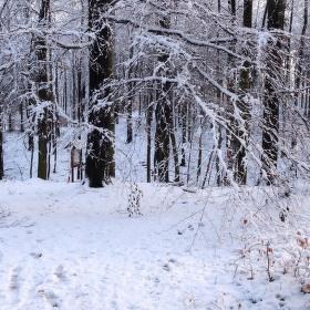 Kouzlo zimního lesa.