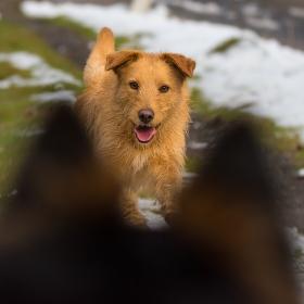 z psího pohledu