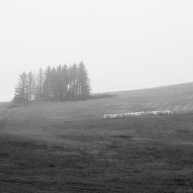 Mlhavá krajina
