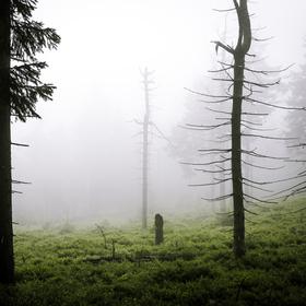 Za mlhou hustou tak, že by se dala krájet...
