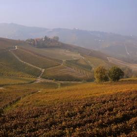 Podzimní vinice v Barolu.