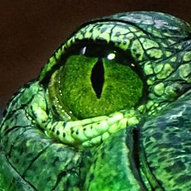 gaviál