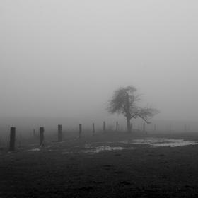 Mlhavá zima