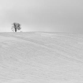 Strom a lavička