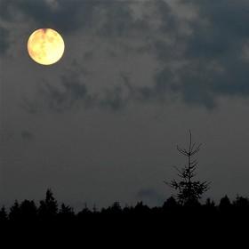 Měsíc nad lesem