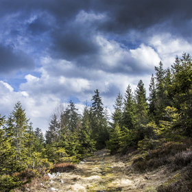 Brdské lesy