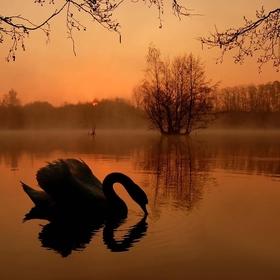 Labutí ráno