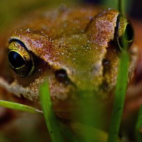 Z žabího pohledu