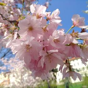 Jaro v podhradí