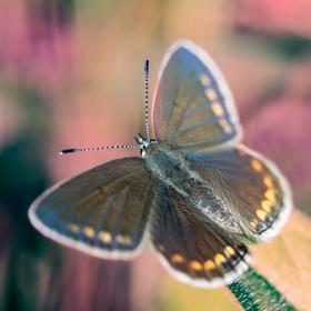 Večer s motýľom