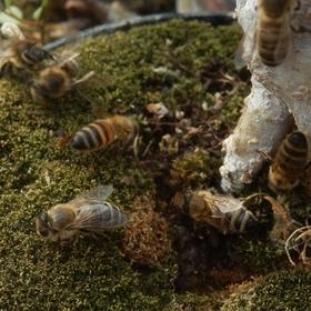 Včelí hospoda