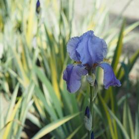 kvet v meste