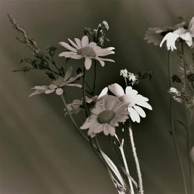A zašimrá mě slunce záře...zas jeden list pryč z kalendáře.Buď mým nekončícím létem,nedosněným snem,nejkrásnějším květem...