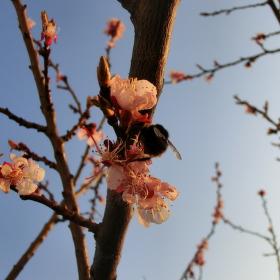 Jaro přichází!