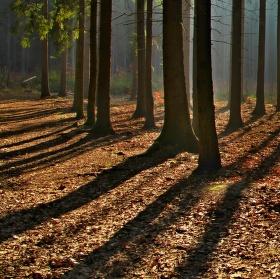 Probuzený les