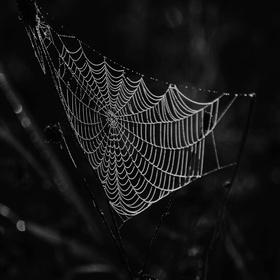 Krása pavučin