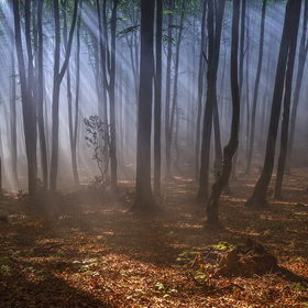 ticho v lese